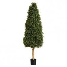 planting-trees-5