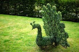 planting-trees-6