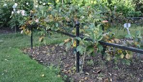 planting-trees-9